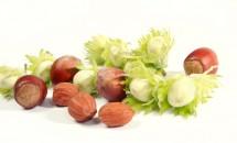 Alunele - utile în bolile de plămâni