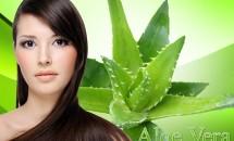 Aloe vera: reţete pentru păr