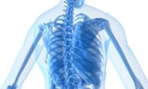 Cercetatorii sunt la un pas de a face rinichiul artificial