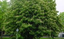Zodiac arboricol Castan