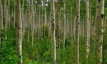 Zodiac arboricol Plop