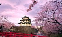 Zodiac japonez Floare de cires