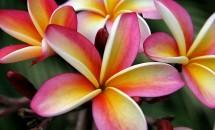 Top 10 cele mai frumoase flori din lume