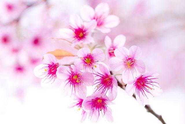 cele mai frumoase flori din lume