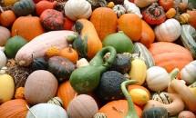 Cele mai bune legume de toamna și importanța lor