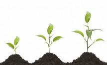 Nutrimentele și stimulatorii de creștere a plantelor