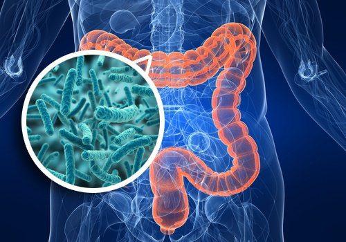 alimente recomandate pentru îmbunătăţirea florei intestinale