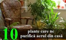 10 plante care ne purifică aerul din casă
