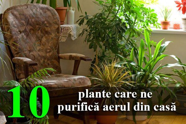 10-plante-care-ne-purifică-aerul-din-casă