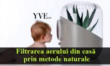 Filtrarea aerului din casă prin metode naturale