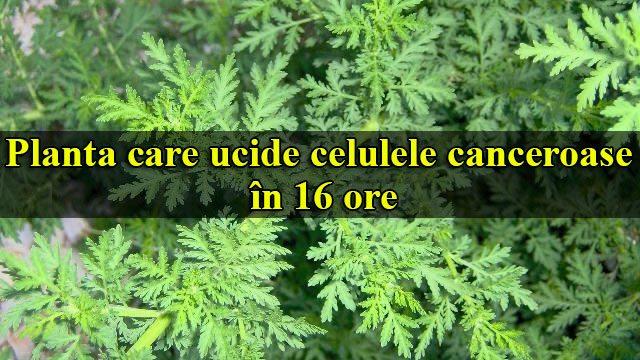 Iată planta care ucide celulele canceroase în 16 ore