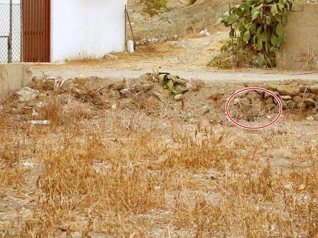 Unde s-a ascuns pisica