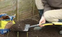 A plantat niște cartofi în care a înfipt niște lăstari. Efectul este unul miraculos!