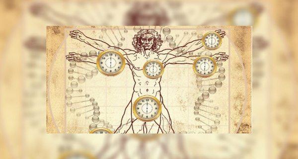 Ceasul chinezesc reglează ceasul organismului