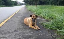 Timp de un an și-a așteptat stăpânii. Așteptarea a luat sfârșit când a fost călcat de o mașină!