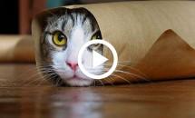 Cele mai amuzante VIDEO-uri cu pisici