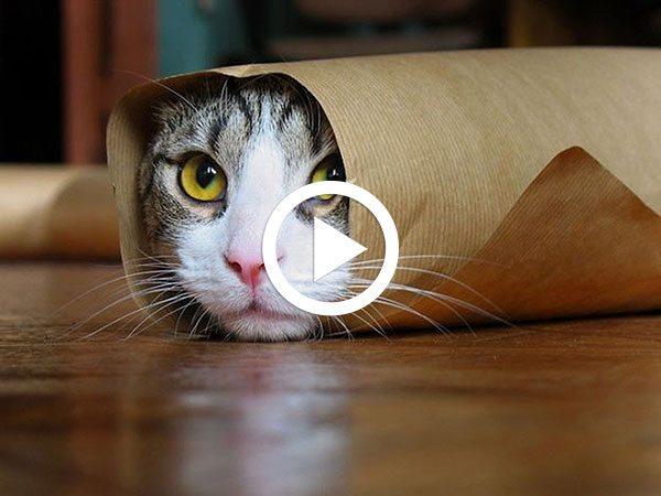 Cele-mai-amuzante-VIDEO-uri-cu-pisici