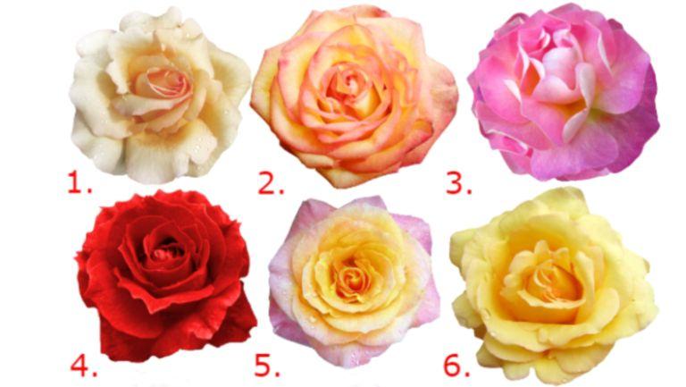 Testul trandafirului te ajută să te descoperi mai bine