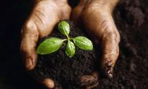 Calendarul complet pentru plantarea răsadurilor