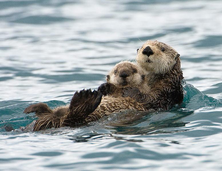 Și animalele pot fi părinți grozavi 10