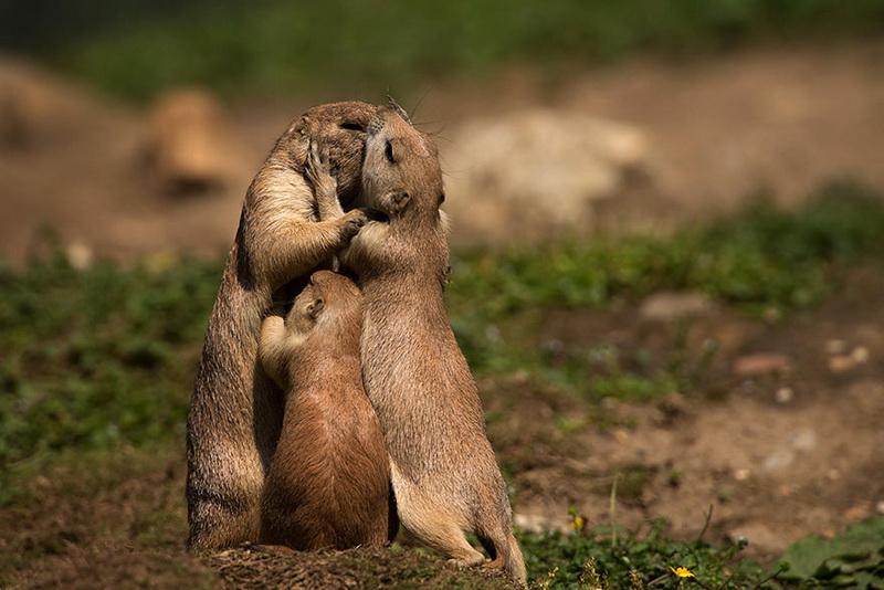 Și animalele pot fi părinți grozavi 13