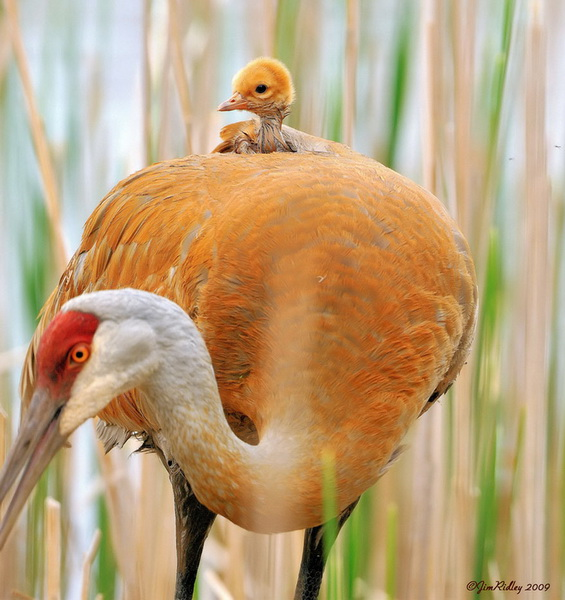 Și animalele pot fi părinți grozavi 17