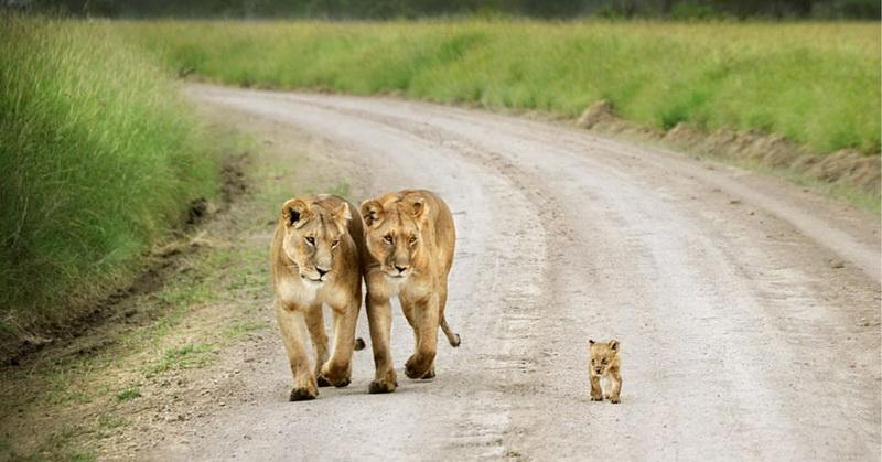 Și animalele pot fi părinți grozavi 2