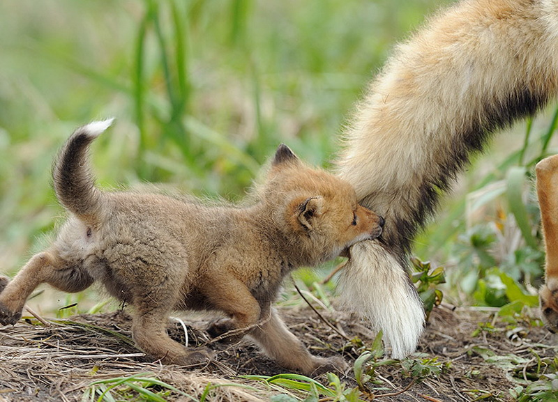 Și animalele pot fi părinți grozavi 4