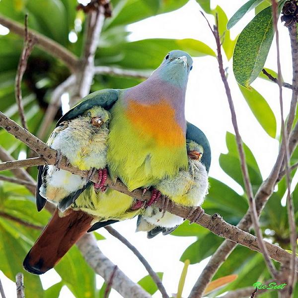 Și animalele pot fi părinți grozavi 5