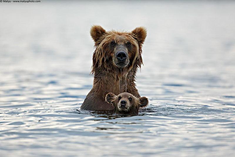 Și animalele pot fi părinți grozavi 7