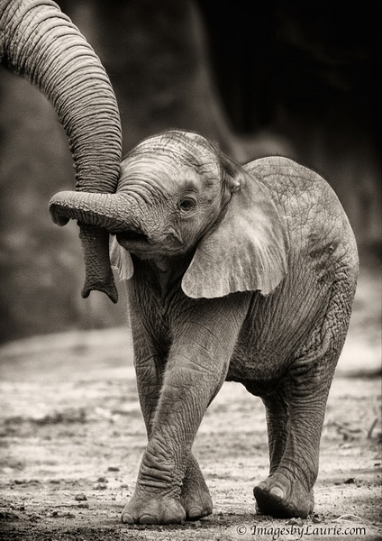 Și animalele pot fi părinți grozavi 9