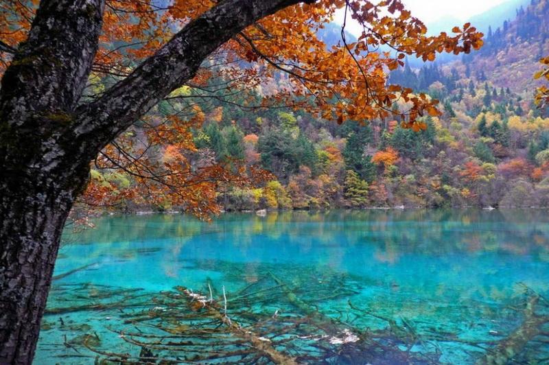 Cinci- Lacul de Flori,