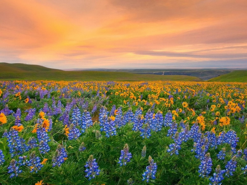 Valea de flori Parcul Național
