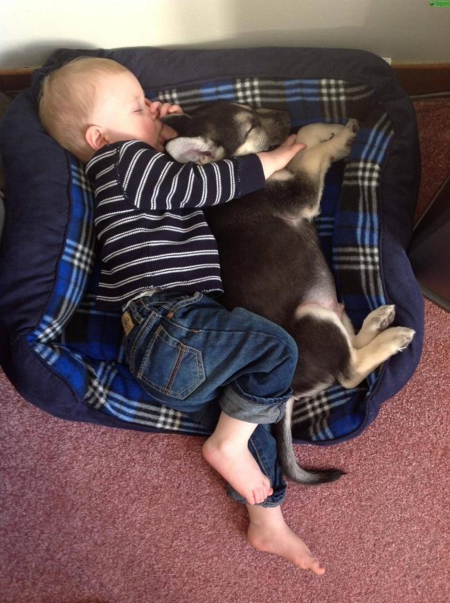 bebelusi si animale 11
