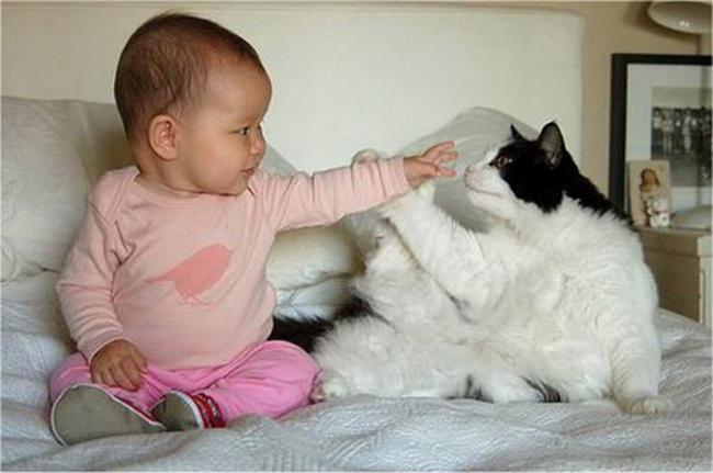 bebelusi si animale 15