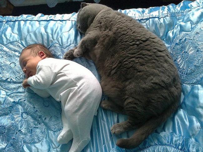 bebelusi si animale 2