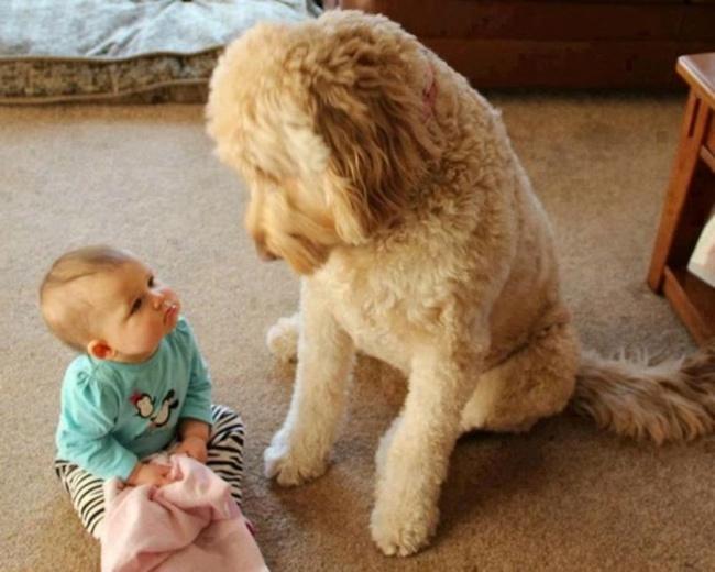 bebelusi si animale 23