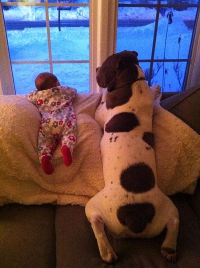 bebelusi si animale 25