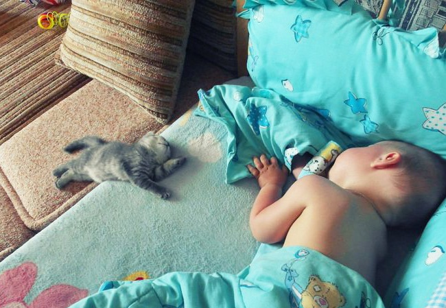 bebelusi si animale 3