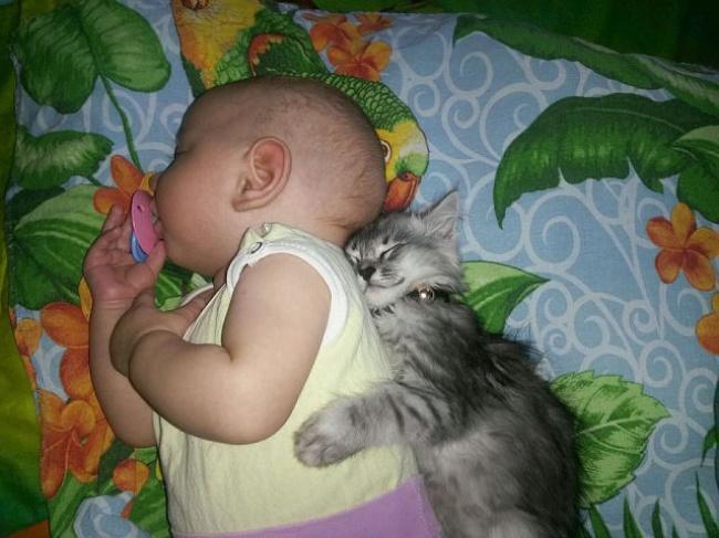 bebelusi si animale 4