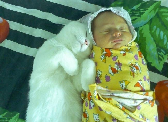 bebelusi si animale