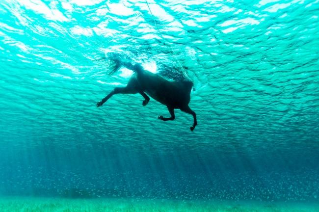 Cal în ocean