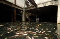 Pești într-un mall abandonat din Thailanda
