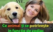 Ce animal ţi se potriveşte în funcţie de zodiac