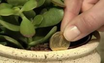 Vrei să ai bani şi noroc?! Iată 5 plante care atrag banii ca un magnet!