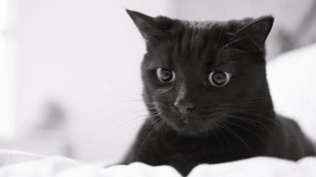 Ce Inseamna Cand Visezi Pisica Semnificatii Pisica In Vis