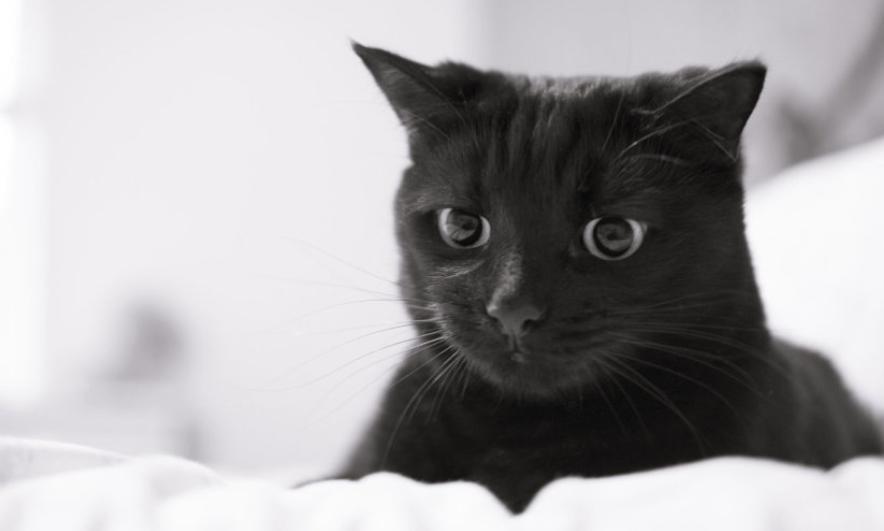 Ce inseamna cand visezi pisica