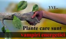 Plante care sunt vampiri energetici: trebuie sa scapi de ele!