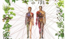 Remedii din plante pentru a echilibra chakrele