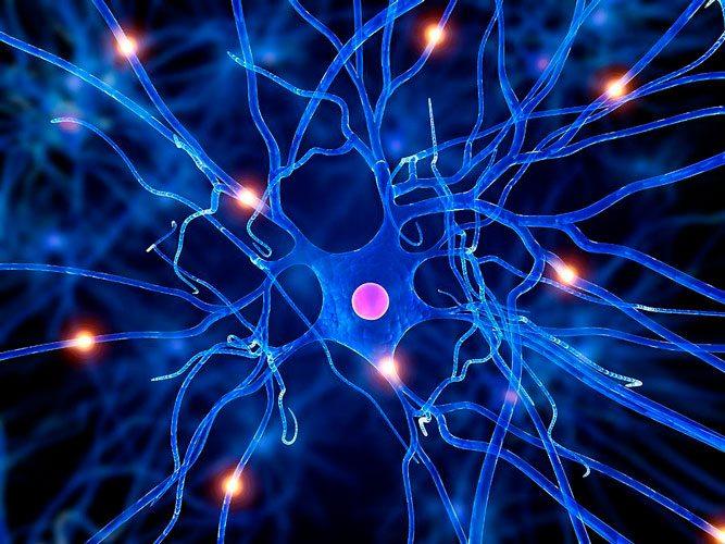 Restabilirea-celulelor-nervoase
